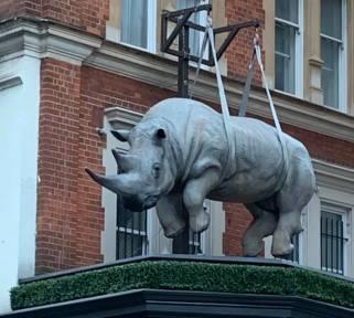 #RhinoUK #London
